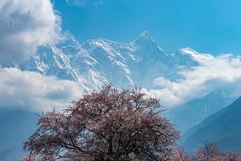 如诗如画!春到雅鲁藏布江大峡谷