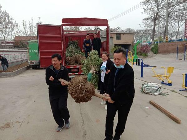 郑州市市场监督管理局驻老耆沟村工作队联合爱心企业开展乡村绿化美化活动