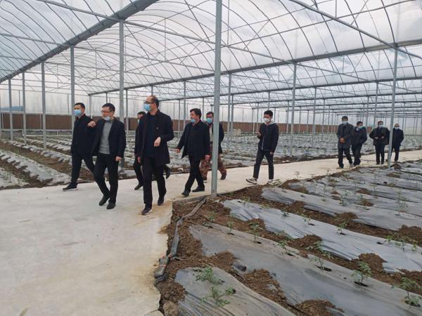 唐河县东王集乡:生态农业开创乡村振兴新篇章