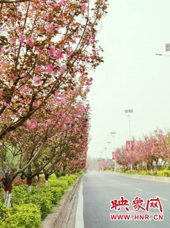 郑州樱桃沟景区4月18恢复开放 每日限流3万人次