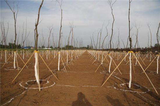 驻马店市开展春季造林绿化观摩活动