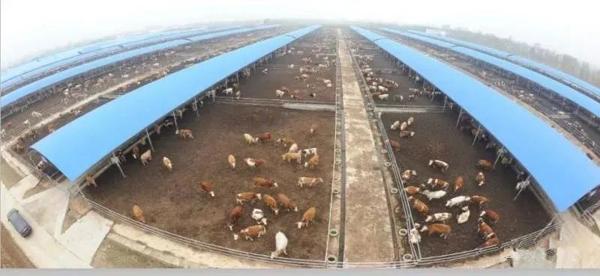 新野县科尔沁牛业:勇担企业责任 铺就脱贫致富路