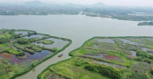 浙江德清:科学修复、合理利用 保护湿地