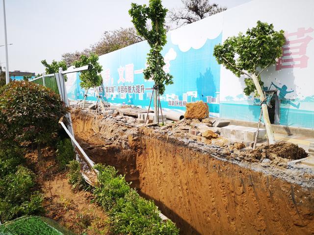 郑州高新热力路边施工挖沟 多棵行道树被毁坏