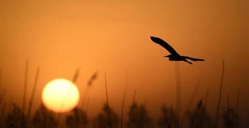 沙湖景区:依沙傍水 候鸟蹁跹