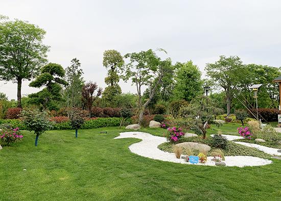 """【郑州故事】男子租地3000多亩种植苗木,建成""""郊野公园""""免费开放"""