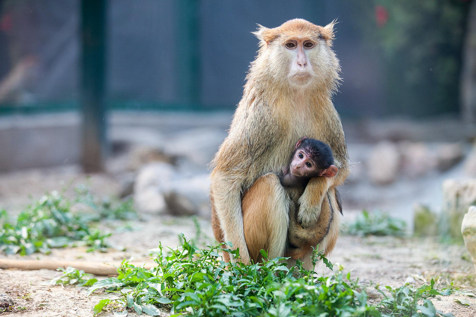 """护士节的福利有点""""可爱""""!郑州动物园新增一批""""萌宠""""更是吸睛"""