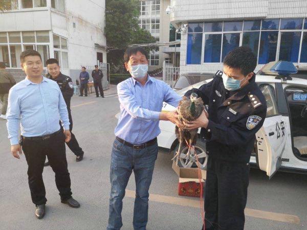 邓州:民警暖心救助受伤孔雀