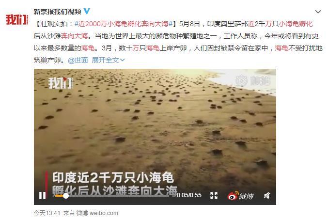 近2000万小海龟孵化奔向大海 网友:这波龟龟赶上好时候了