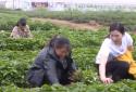 唐河姊妹花 网上卖红薯苗每天发货近千件