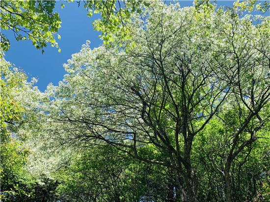 奇石飞瀑迎客来,来尧山随拍5月的翠蓝色!