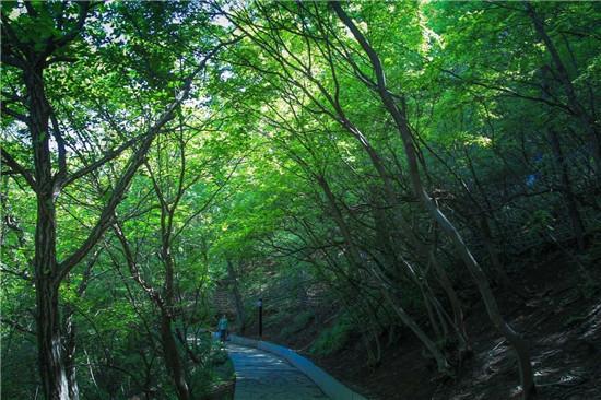 """一到夏天,云台山就美成了""""绿野仙踪""""!"""