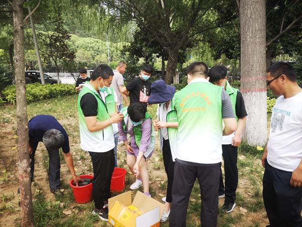 """漯河杨柳絮""""漫天飞舞""""得到有效控制 园林人这般操作明年见!"""