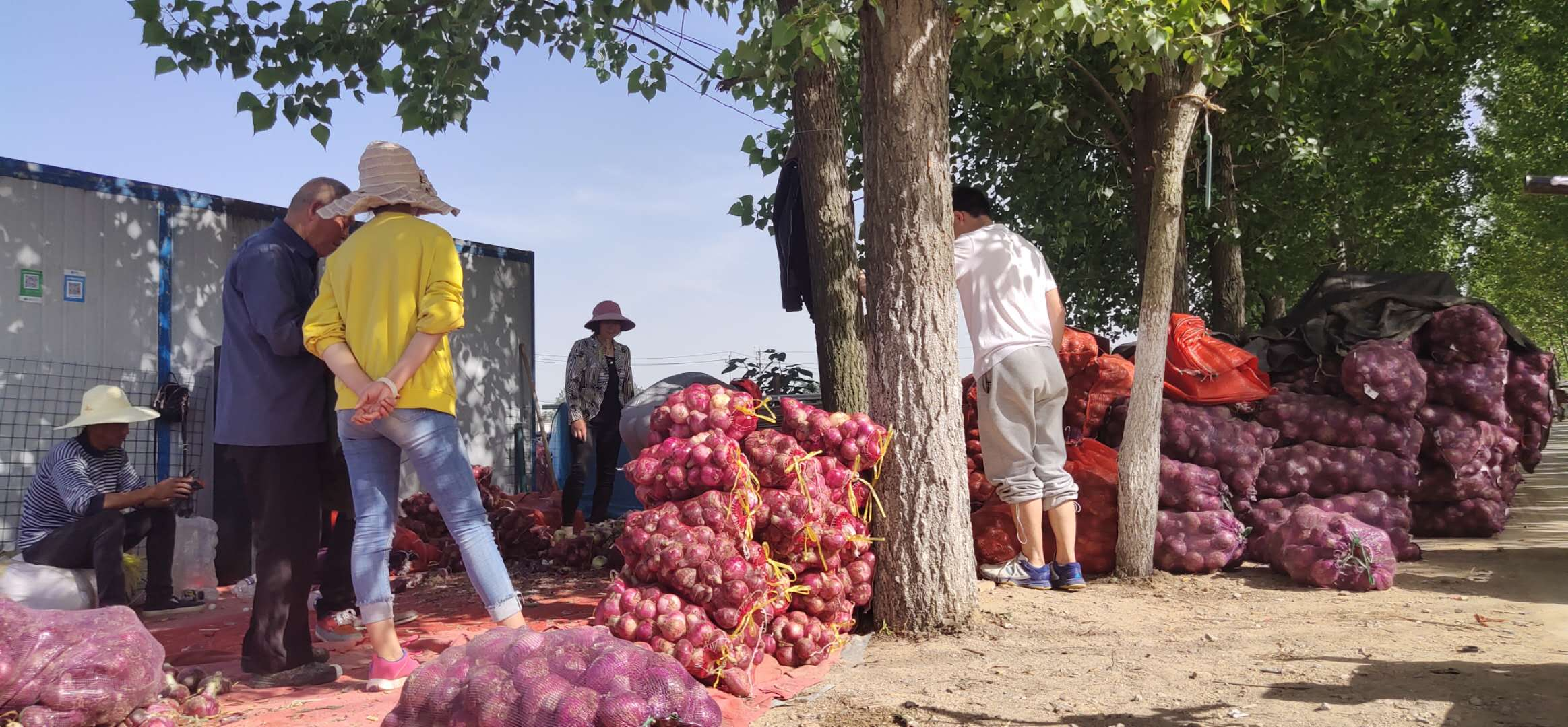 中国人寿献爱心  帮农解决售菜难