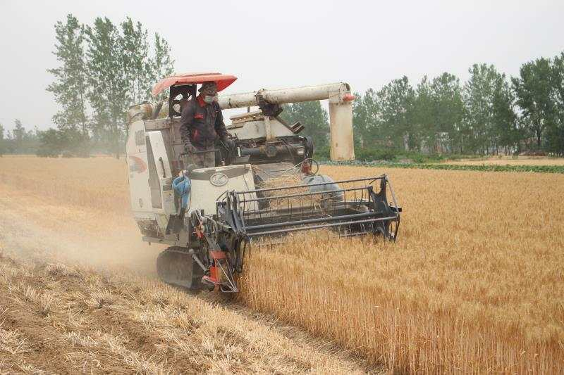 汝南县古塔街道小麦旱灾之年保持丰产