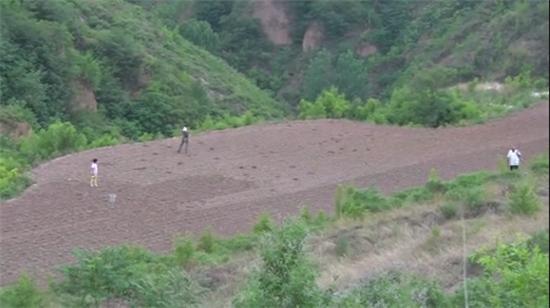 洛阳伊川县:坡高沟深的丘陵山地,核桃却在这里扎了根