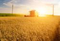 农业农村部:全国大规模小麦跨区机收全面展开
