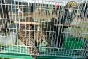 让爱飞翔——驻马店市林业局、市野生动物临时救助站助十余只幼鸟回归大自然