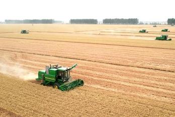 河南周口:10万亩小麦收获正酣