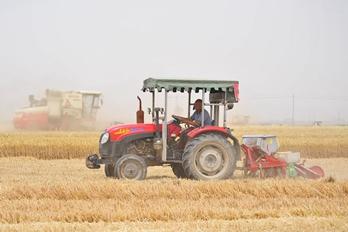 豫北地区麦收进入高峰期