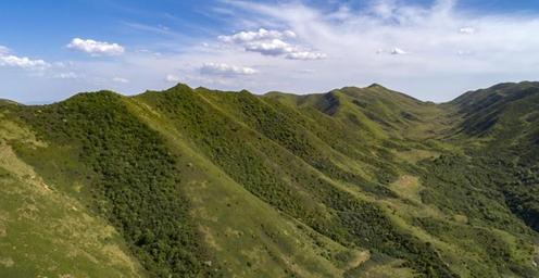 绿染西海固 植被覆盖度超7成