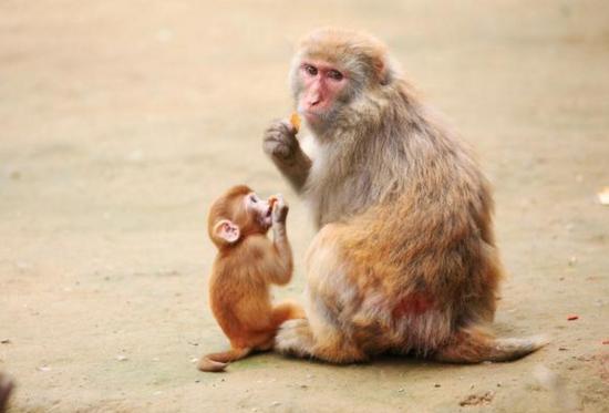 郑州市动物园新设三处动物投喂试点,增强游客互动体验
