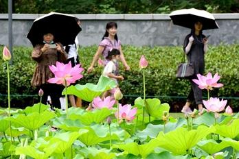 河南郑州:赏荷度假