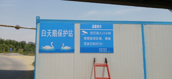 """郑州市石佛办事处欢河村:""""天鹅保护站""""真心守护天鹅 为它们安全保驾护航"""