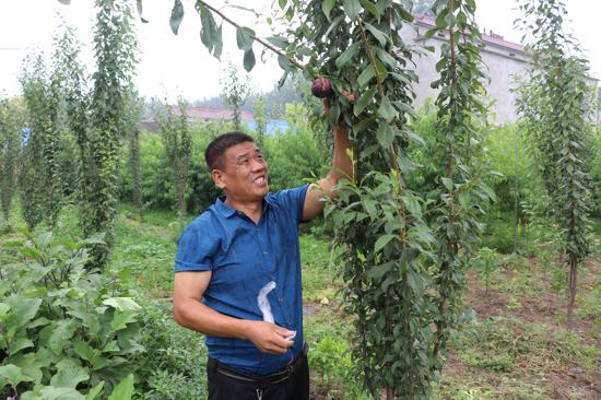 太康李华峰:自费整理村环境,20处垃圾堆放地变果园