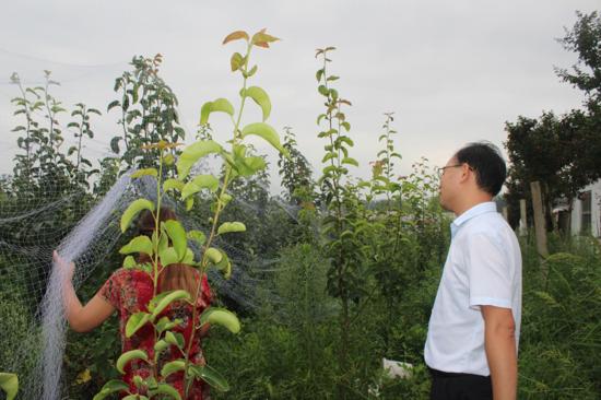 汝南县常兴镇人大代表视察特色产业发展 关注乡村振兴