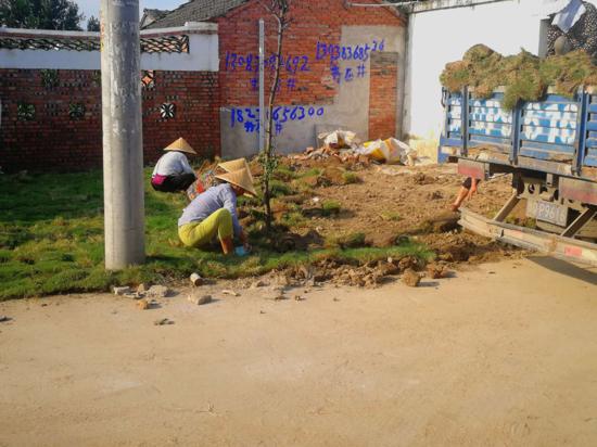 遂平县石寨铺镇:多策并举发挥群众主体作用提升全镇人居环境