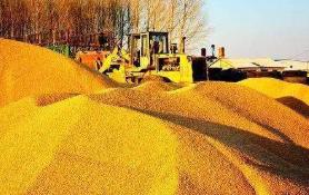 守稳农业基本盘 粮食丰收有保障