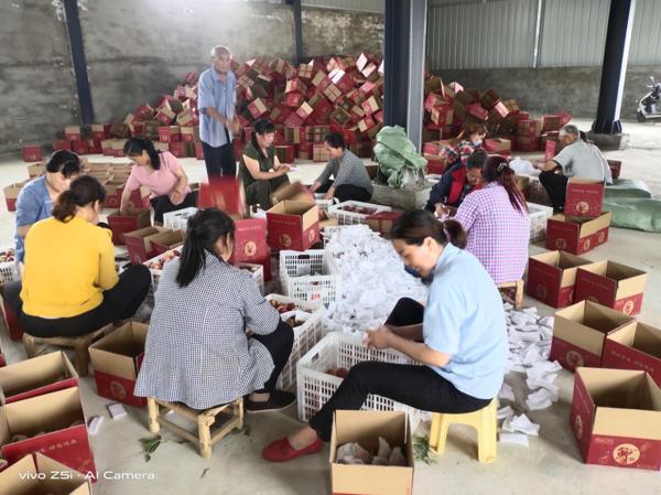 """唐河县城郊乡:""""红薯强""""的扶贫成绩单"""