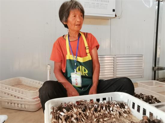 【全面小康•一个都不能少】周口市太康县:小产业带动大扶贫