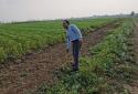 南阳要占1.5万亩基本农田建养猪场 专家:操作过程经不起推敲