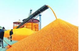 8部门印发通知安排部署秋粮收购工作