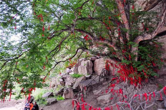 洛阳龙潭大峡谷——珍稀植物的美好家园!