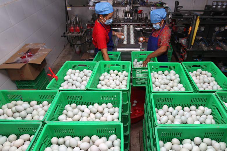 河南鄢陵:小鸭蛋大产业