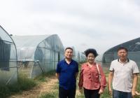 九三学社河南省科学院生物所支社赴登封市指导秋季食用菌大棚栽培技术