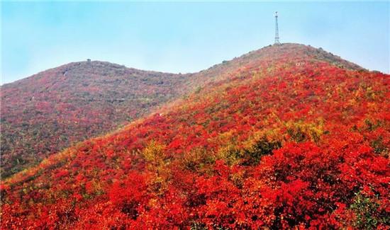 """青天河""""十万亩红叶""""盛宴,震撼美景提前赏!"""