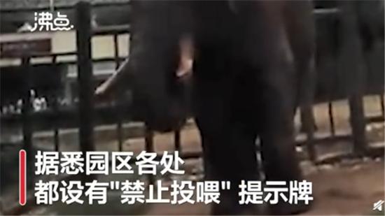 过分!游客用裹塑料袋苹果投喂大象 网友:拉入黑名单