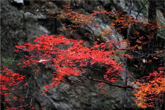 中国风景名胜区协会年度会议定在尧山温泉旅游度假区召开