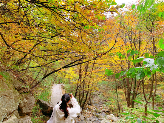 醉美红叶赏景正当时  平顶山市第十届(尧山)红叶节绚丽开幕