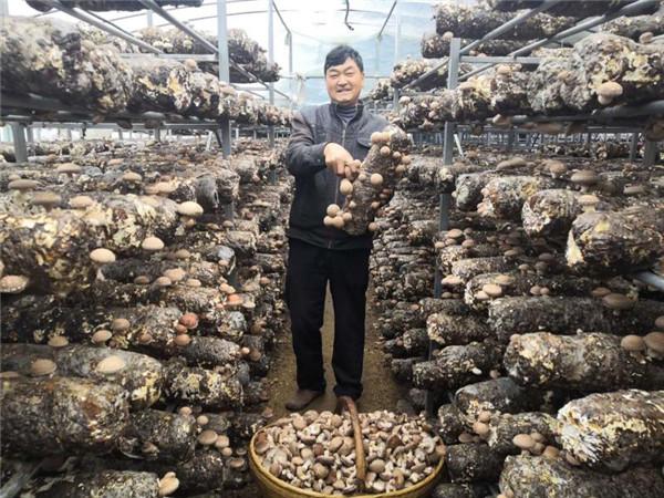 南召县:产业发展讲方略 群众致富有门路