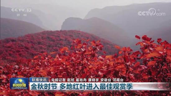 金秋时节到 焦作红叶美