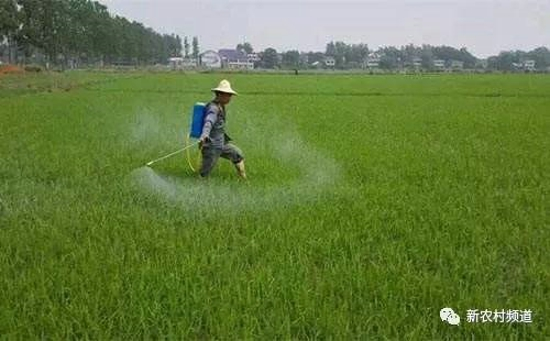"""中天恒信""""能锋杀"""" 四百亩玉米减产! 除草还是杀玉米!"""