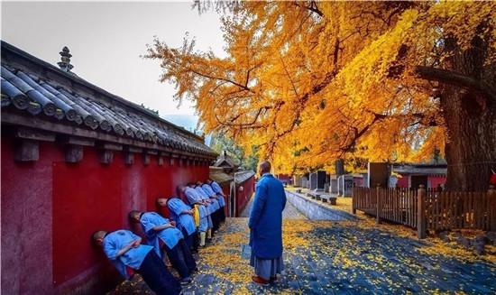赏千年银杏,嵩山少林寺的秋天红黄最相宜!