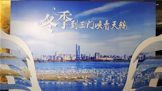 """""""冬赏天鹅季""""组团游三门峡引领今冬旅游新风尚!"""