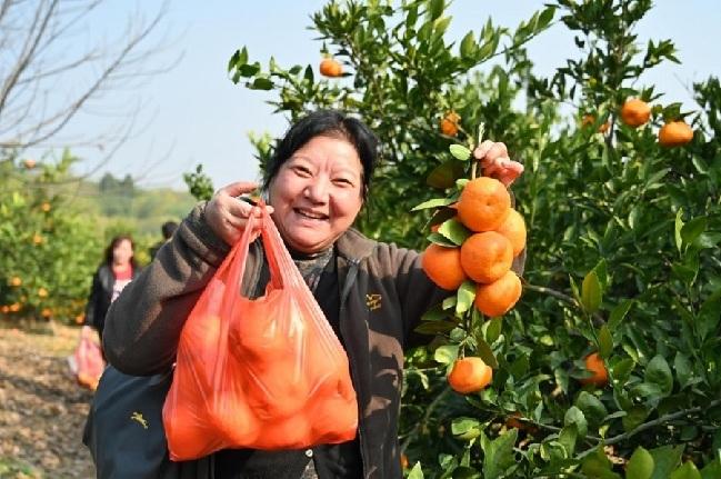 河南淅川:齐聚丹江岸 共飨丹江橘