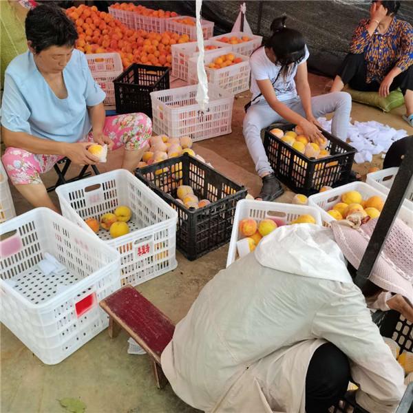 唐河县苍台镇:激励贫困群众靠勤劳拓展致富路